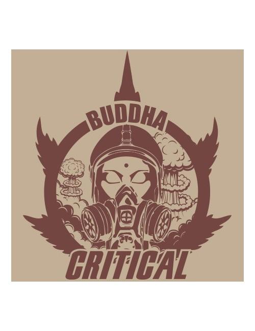 Budhha Critical